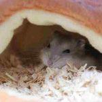 ハムスターのトンネルを手作り!家にあるもので簡単に自作できる?